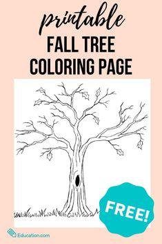Fall Tree Coloring Page Tree Coloring Page, Fall Coloring Pages, Adult Coloring Pages, Kindergarten Colors, Kindergarten Worksheets, Fun Fall Activities, Preschool Activities, Fall Arts And Crafts, Spooky Trees