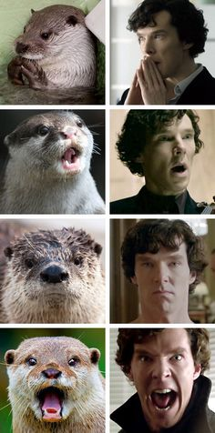 Otters who look like Benedict Cumberbatch. I adore Sherlock. And  otters.