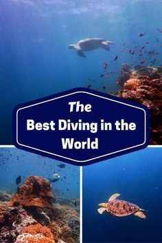Best Diving in the World: Mabul & Sipadan  #snorkeling #diving #travel #travelling #destinations #travelblogger #travelstories #travelinspiration #besttravel #tourism #travelwriter #travelblog #traveldeeper #traveltheworld  http://adventuresoflilnicki.com/