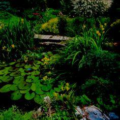 I love pond plants
