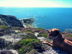 Reisen mit Hund - die besten Spontantrips. Teil 1: Frankreichs schöne Küsten