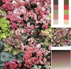 Amazing Nature Color Palettes