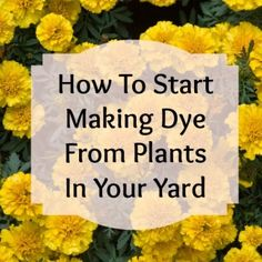 How To Make Dye From Plants | Podcast 16
