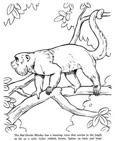 Red Howler Monkey Drawing And Coloring Page