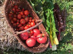 Freitagslieblinge mit Tomaten aus dem Saisongarten Vegetables, Food, Friday, Tomatoes, Lawn And Garden, Essen, Vegetable Recipes, Meals, Yemek