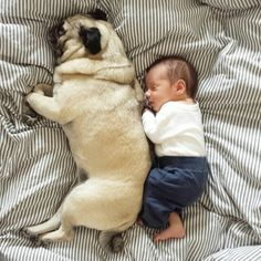 So adorable!!! Pug and baby cuteness