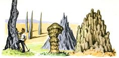 Curiously enough, we can find the most complex and developed kingdom just in termite colonies.