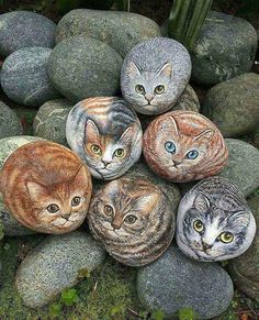 Amazing   Tag Your Friends  . #animales #cat #cats #nature . . unknown