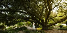 by simply photography | bride | jc raulston arboretum, raleigh