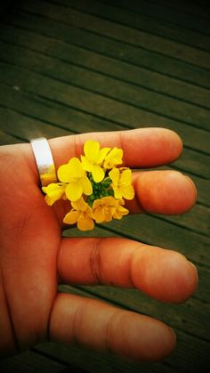 in Jeju, the yellow flower in my hand