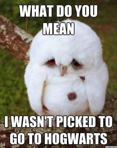 Harry Potter. Oh this is so sad! I know the feeling, bud... no no you will get picked for something you get picked to be my owl friend
