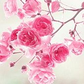 24 Super Ideas For Flowers Wallpaper Desktop Vintage Pink Roses Beautiful Flowers Images, Beautiful Pink Roses, Beautiful Flowers Wallpapers, Amazing Flowers, Pretty Wallpapers, Pretty Flowers, Beautiful Things, Wallpaper Nature Flowers, Rose Flower Wallpaper