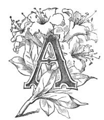 Fancy Letter A Image