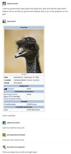 the emu war the great emu war pinterest emu war emu and marauder