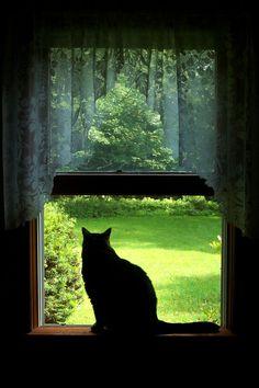 black cats, windowblack cat