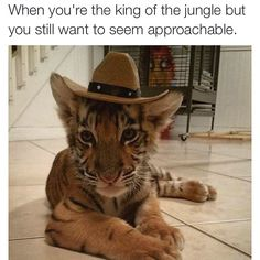Meme by Caitlin Comeskey. @caitlincomeskey #meme #tiger #approachable #boss
