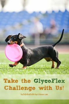 The GlycoFlex Challenge is easy and FREE - Get a 30-day supply of GlycoFlex hip & joint supplement for signing up. #sponsored