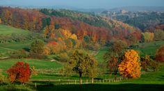 Kommt die Sonne etwas raus,   ...  sieht der Wald gleich besser aus. Auch bei Mettlach-Wehingen. :-)