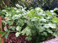 Romarin : beau au jardin, utile en cuisine En savoir plus sur http://www.jardiner-malin.fr/fiche/romarin.html#cxyxMcVHi2dr0sCD.99