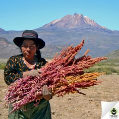 Press 'like' to show your support for Esther Guarachi, then see how #FairTrade impacts #quinoa farming communities.