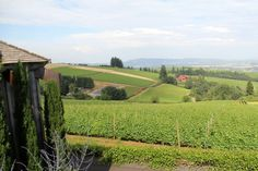 Tagabonds: Willamette Valley | Wine Tasting in Oregon's wine country