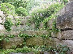Lichtschacht, Hang an Terrasse neu gestalten - Seite 1 - Gartengestaltung - Mein schöner Garten online
