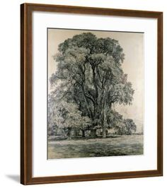 Elm Trees in Old Hall Park, East Bergholt, 1817 Giclee Print by John Constable | Art.com Framed Artwork, Framed Prints, Wall Art, Tree Drawings Pencil, Frame My Photo, Elm Tree, Tree Sketches, Victoria And Albert Museum, Types Of Art