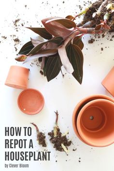 Indoor Plant Pots, Potted Plants, Low Maintenance Plants, Garden Spaces, Plant Care, Houseplants, Gardening Tips, Planter Pots, Bloom