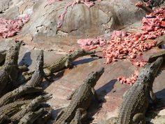 #Budgettravel Mamba Crocodile Village