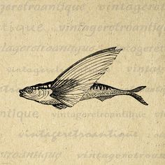 Digital Flying Fish Graphic Image Antique Fish Illustration Printable Download Vintage Clip Art. Vintage printable graphic for printing, iron on transfers, tea towels, tote bags, t-shirts, papercrafts, and many other uses. Real antique clip art. Antique artwork. This digital graphic is large and high quality, size 8½ x 11 inches. Transparent background PNG version included.