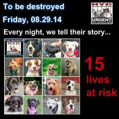 TO BE DESTROYED - 08/29/14 PITTIES ARE IN DANGER AGAIN. THERE ARE FAR TOO MANY TODAY!!! ALL THESE DOGS COUNT ON US!!! LET'S NOT LET THEM DOWN!!! PLEASE OPEN YOUR HEARTS AND PLEDGE, TAKE THEM HOME, BUT BE QUICK AS TIME IS TICKING AWAY. PLEASE BE QUICK WHEN MAKING UP YOUR MIND!!  https://www.facebook.com/Urgentdeathrowdogs/photos/a.611290788883804.1073741851.152876678058553/861909537155260/?type=3&theater