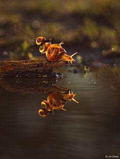 Snails by Jan Siwmir on 500px