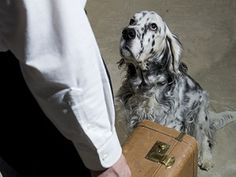 In-Home Dog Boarding -- have your dog boarded at a home, not a kennel or vet office