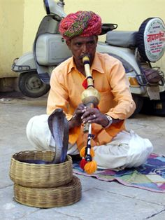 Finding livelihood for snake charmers - read complete story click here..... http://www.thehansindia.com/posts/index/2014-07-31/Finding-livelihood-for-snake-charmers--103595