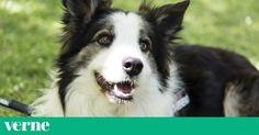 Este perro salva la vida de otros perros detectando venenos en parques