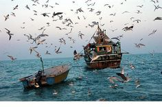 Qeshm Island, Persian Gulf, Iran