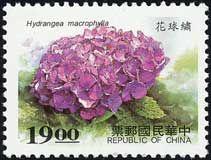 China, 1997. Hydrangea macrophylla