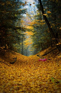 autumn_woods_vi_by_drag_my_soul.jpg (900×1354)
