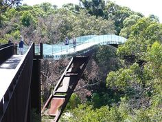 tree top walkway at Kings Park in Perth, Australia. lovely photo of the tree top walk in kings park, great lighting Oh The Places You'll Go, Places To Travel, Places To Visit, Perth Western Australia, Australia Travel, Brisbane, Flora Und Fauna, Tree Tops, Scenery