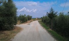 Beautiful photo of the country. In the distance you can see San Gimignano