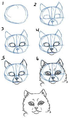Image result for cat proportions
