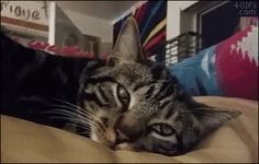 """Surprise! Thanks for following Cat GIF Central. Hover here and click """"Follow"""" if you're not a subscriber yet."""
