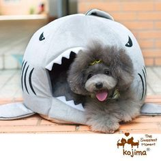 Colorfulhouse Shark Round House Puppy Bed with Pet Bed Mat, Small to Medium (Medium) - http://www.thepuppy.org/colorfulhouse-shark-round-house-puppy-bed-with-pet-bed-mat-small-to-medium-medium/