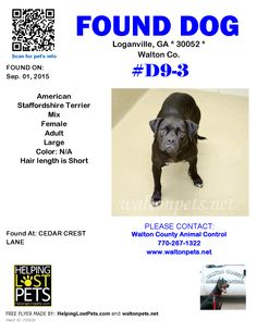 Found Dog - American Staffordshire Terrier - Loganville, GA, United States