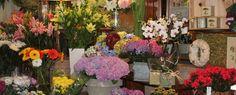 HOME - Azalea Indica, flores pozuelo de alarcón