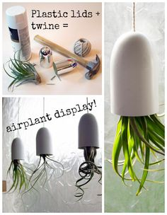 Use plastic lids to display airplants