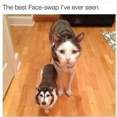 Face swap I've ever seen LOL