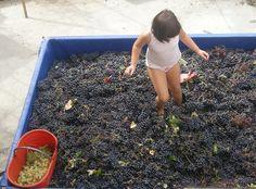 Enjoy us with grapes! Tacchino Raffaele - Piedmont