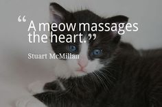 A meow massages the heart. Stuart McMillan #dogs #cats