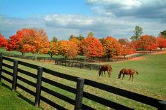 Autumn Horses photo AutumnKentuckyHorseFarm.jpg